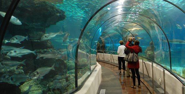 sea-life-benalmadena-tunel