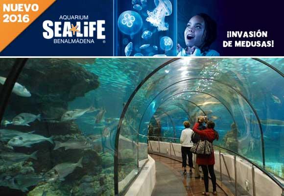 Las medusas invaden Sea Life Benalmadena