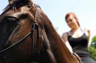 Ofertas en Rutas a caballo