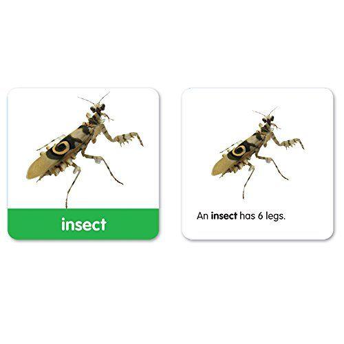 Learning Resources Vocabulary Photo Cards – Juego de tarjetas de