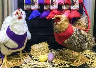Chicken Harness (Purple, X-Small)